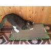Новое поколение когтеточек-лежанок для кошек