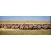 Продаю племенных овец эдельбаевской породы.