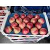 Поставка фруктов и овощей в кротчайшие сроки.