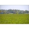 Земельный участок 10 сот.  по Симферопольскому шоссе,  50 км от МКАД,  недорого